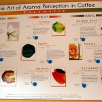 The Art of Aroma Perception